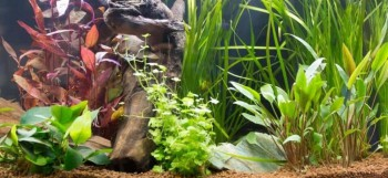 Top 8 Water Plants Around The World